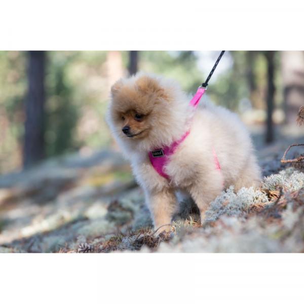 Rukka Pets Mini Comfort tuig, turquoise
