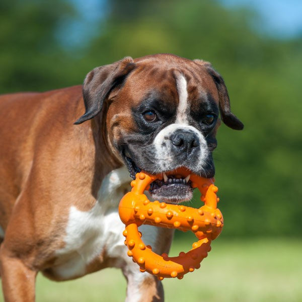 Major Dog Octopus Retrieval Ball Large