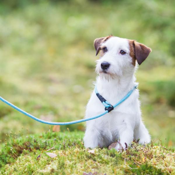 Rukka Pets Rope retriever lijn, aqua