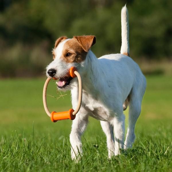 Major Dog Dummy Scuffle Small